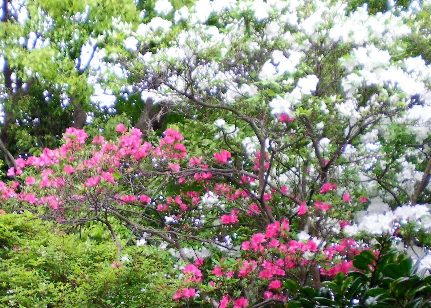 平戸藩お庭めぐり